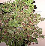 Uva Fragolina
