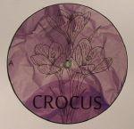 Crocus 004