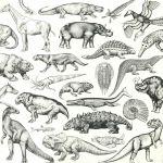 Skratch Fossils