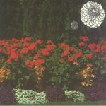 Annual Flowers In Color