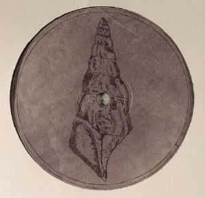 VOISKI/ROBERTO - Calyptraphorus Velatus