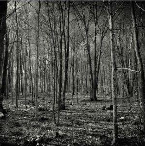 EINERLEI - Forest EP
