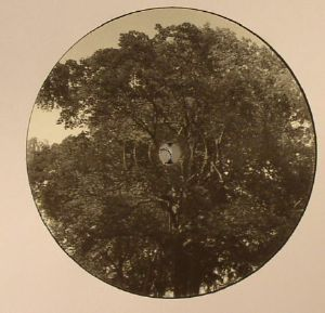 YOUANDME/THE ANALOG ROLAND ORCHESTRA - BAUMLPE 004