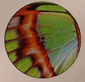 PEARSON SOUND - Robin Chasing Butterflies