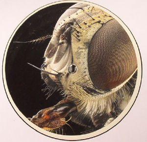 ARCTOR - Monachopsis