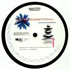 EX TERRESTRIAL - Euphorbia
