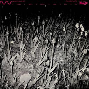 CUCINA POVERA/ELS - The Oystercatcher