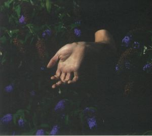 NORDMANN - In Velvet