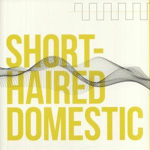 SHORT HAIRED DOMESTIC - Short Haired Domestic