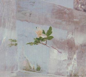 EFTERKLANG - Wildflowers