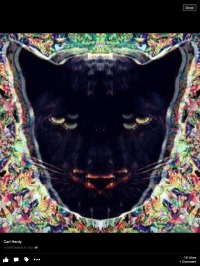 Carl H (ANIMALS ON PSYCHEDELICS )